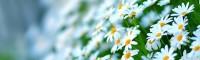 داروهای گیاهی و طب سنتی